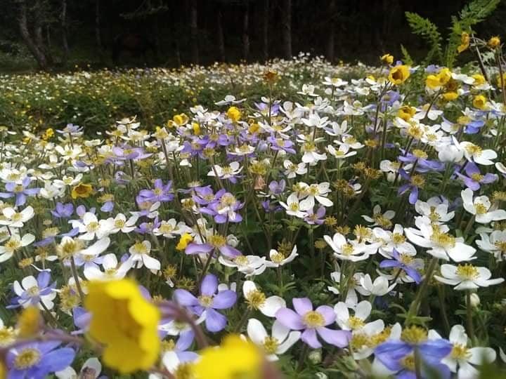 गिबिरंगी फूलले ढाकिएका खप्तडका हरिया पाटन अहिले झनै सुन्दर देखिएका छन्।