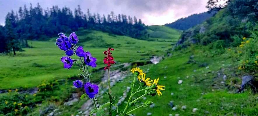 बर्खाका ४ महिना खप्तडका पाटनले ३ पटक फुलको तन्ना फर्ने गर्छन्।