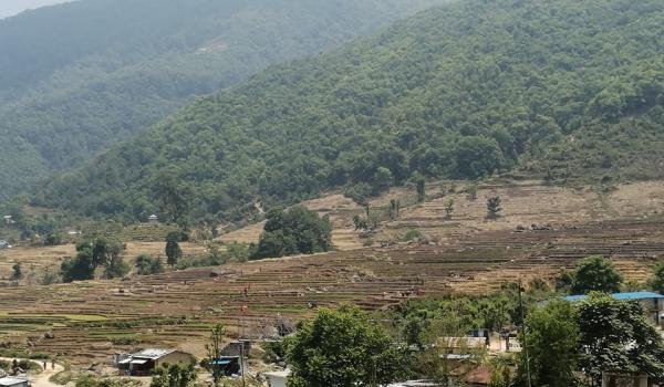 डोटी जिल्लामा रोपाई गर्दै किसानहरु