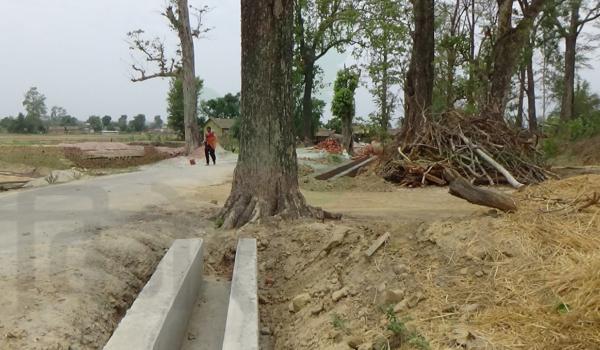 धनगढी उपमहानगरपालिका वडा नम्बर १७ को धुरजन्नामा सघन शहरी विकास कार्यक्रम अन्तरगत कालोपत्रे भएको सडकमा नालीको बिचमा रहेको रुख हटार्ईएको छैन्। उपमहानगरपालिकाको अन्य क्षेत्रमा पनि बिच सडकमै रुख र विद्यु्तका पोलहरु नहटाई  कालोपत्रे गरिएको छ।