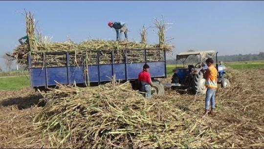 Embedded thumbnail for उखु किसानको समस्या समाधान गर्न कांग्रेसको माग, प्रदेश सरकारले दियो ३ दिनको समय