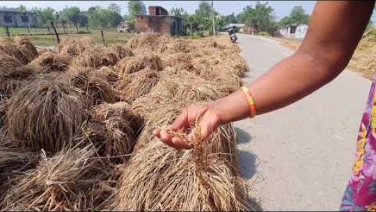 Embedded thumbnail for कैलालीमा बाढी र डुबान प्रभावित क्षेत्रका किसानलाई दुई प्याकेजमा राहत वितरण गर्ने प्रदेश सरकारकोतयारी